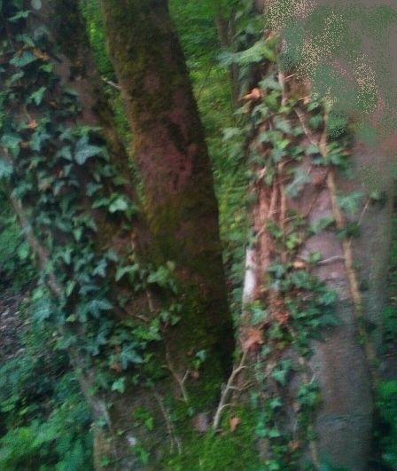 gesuchter Dreibaum