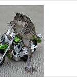 Saltwaterfrogs