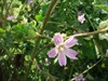 Flor I