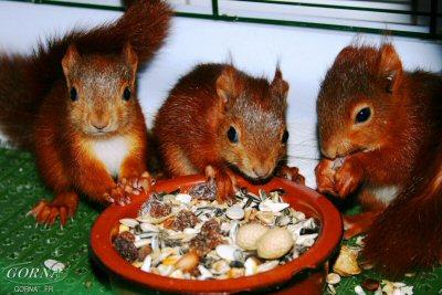 alibi des écureuils