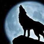 Starwolf013