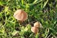 Cogumelos (2)