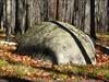 Loved this big rock! log image