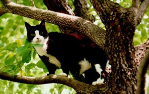 Rascal in a tree