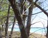 Sheldon Duck in tree with Half-Mooned Cache