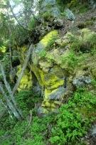 Lisejnik na skale
