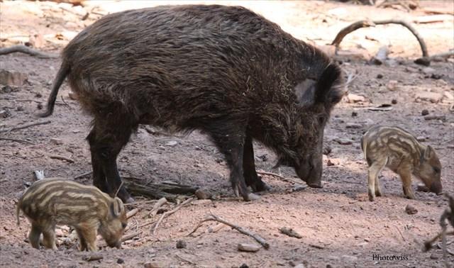 Gc4z111 les 2 chapelles 9 les animaux de la garrigue unknown cache in occitanie france - Mot commencant par cy ...
