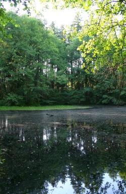 Lesní rybníček u kešky