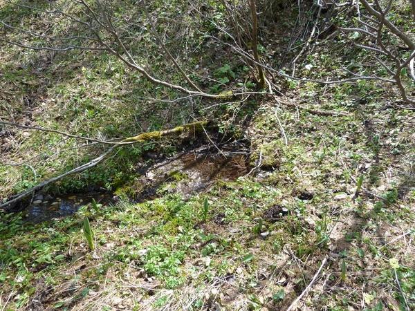 Die Quelle des Weißenbach