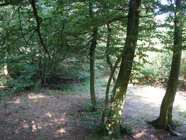 Gcwwk0 woodcam traditional cache in le de france - Appareil photo jetable carrefour ...