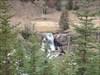BCP433 - Dyson Falls