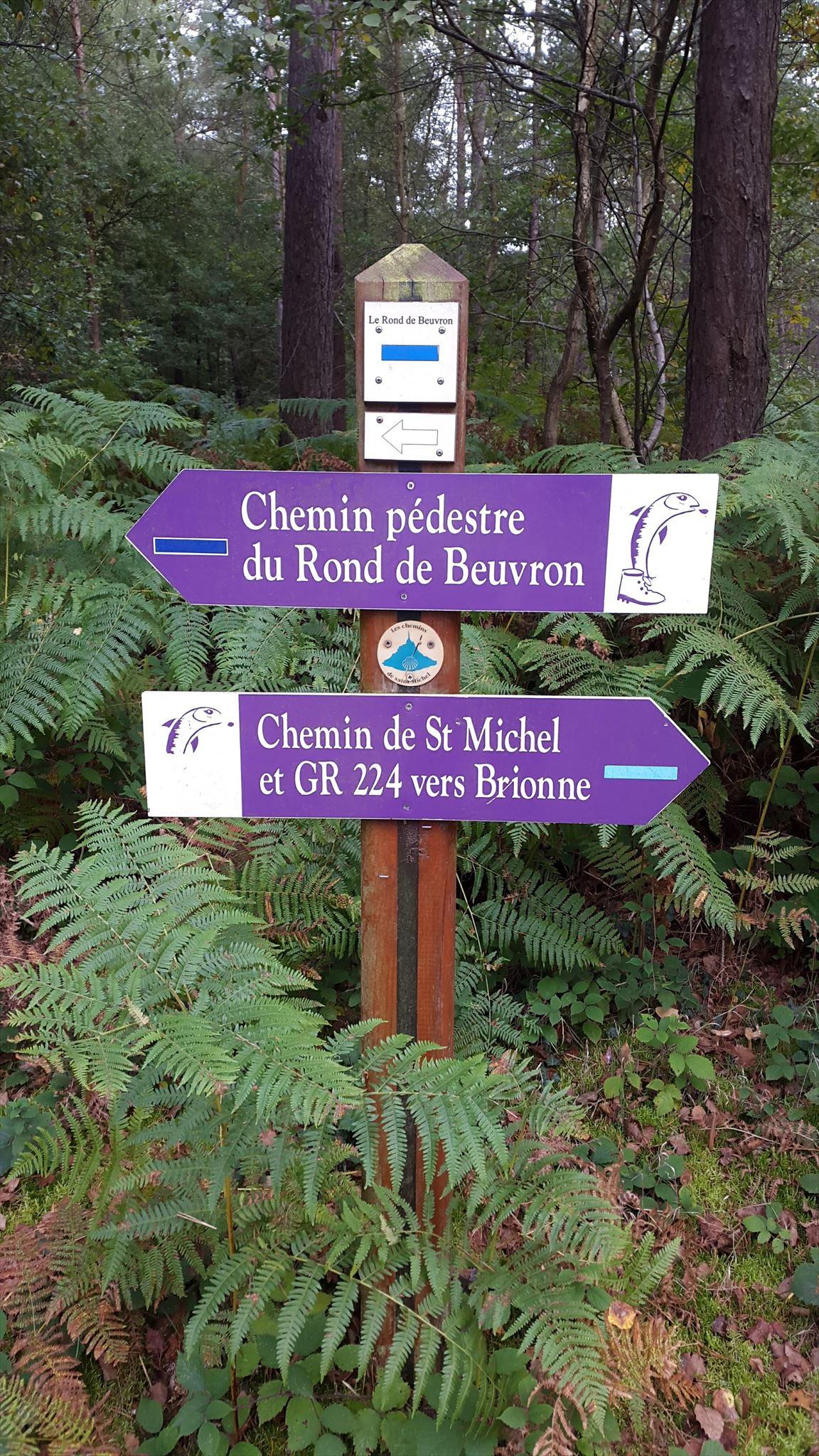 Gc7cxq0 Chasse Aux Champignons En Foret De Montfort