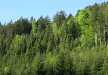 Stromy ve svahu