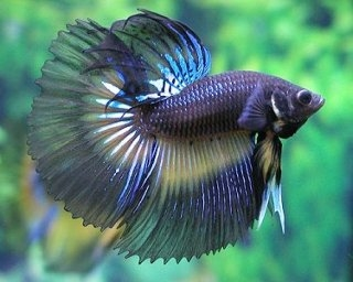 Apologise, xxx fish xxx are not