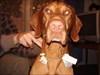 Friend's dog name: Beni