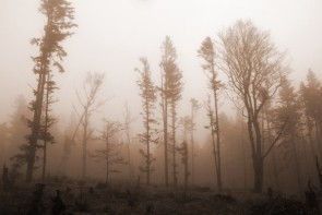 Mlha na Sněžných jamách