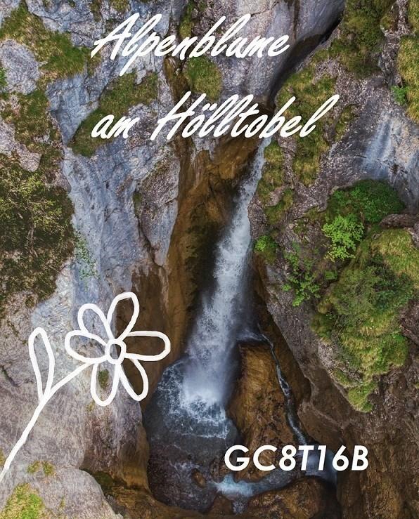 Banner Alpenblume