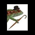 Another Mr Lizard