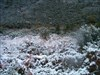 O manto log image