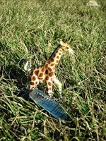 Giraffe on the Go