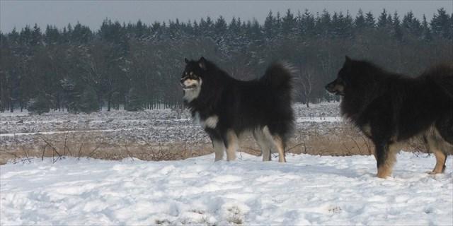 Honden op de hei