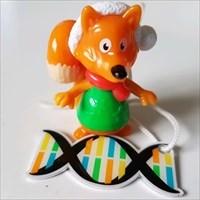 Renard voyageur / Fox traveler