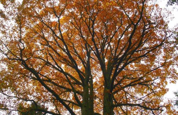 Podzimní koruna