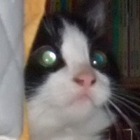 avatar de aik0nwan