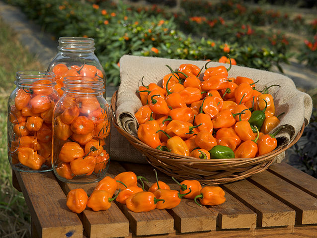 Habaneros - This image is in the public domain because it contains materials that originally came from the Agricultural Research Service, the research agency of the United States Department of Agriculture. - http://commons.wikimedia.org/wiki/File:ARS-habanero.jpg
