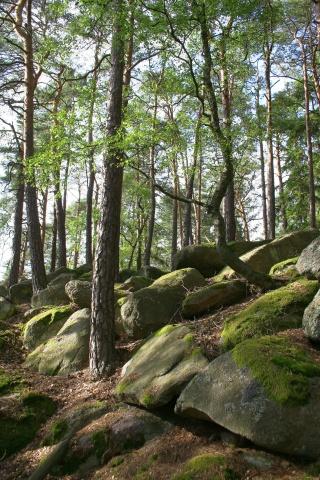 Stromy mezi balvany