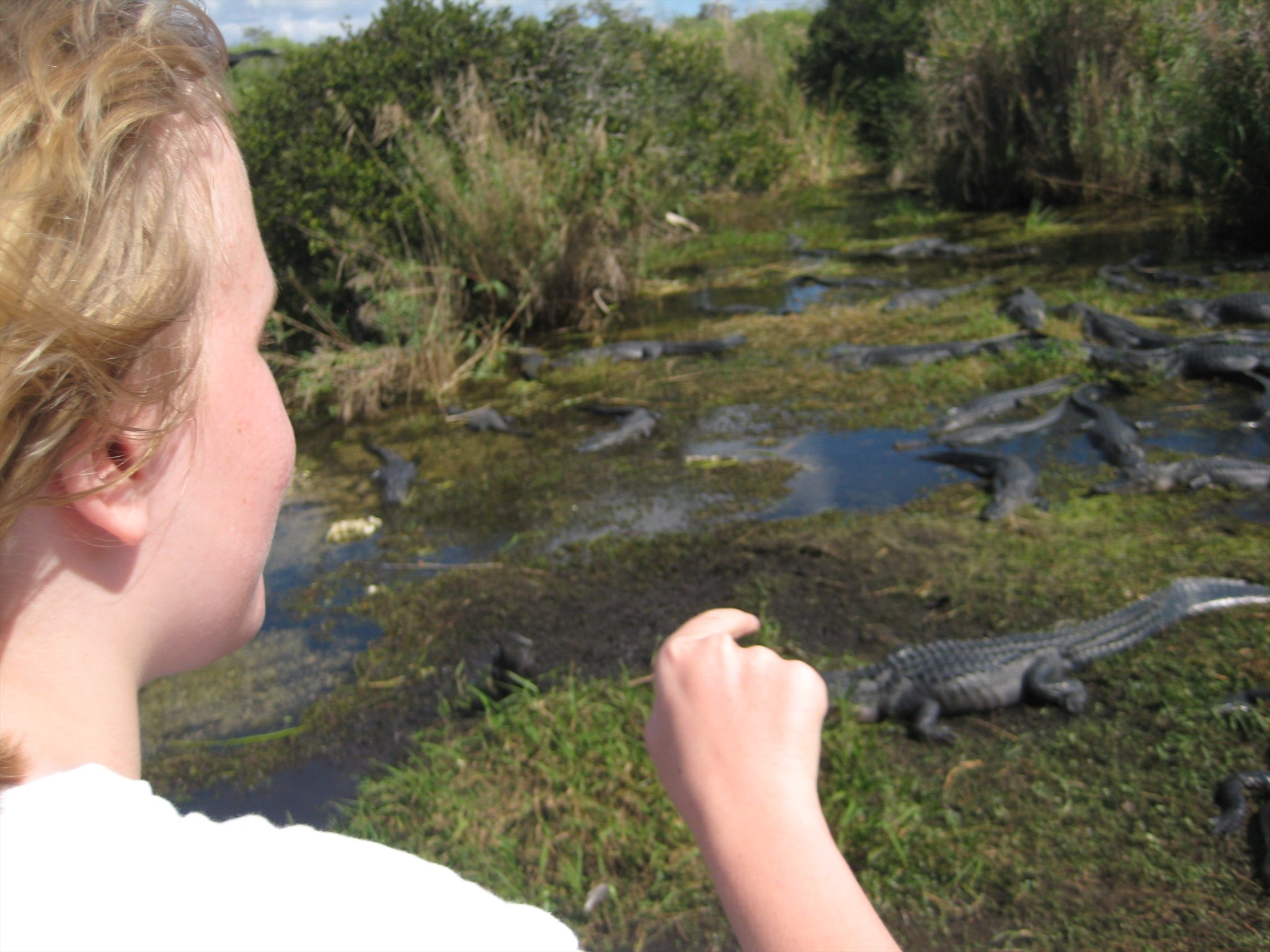 Counting some of the Everglades' natural residents. Photo by geocacher lilyfly.