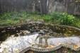 Jardim Botanico 4