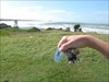 Siv-Eivor at Hastings Point, NSW Australia Travel Bug Siv-Eivor at Hastings Point, (in Battle geocache) New South Wales, Australia. April 20th 2009.