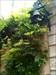 Jardim Botânico Tocar Primeiro