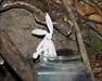 Happy Hare in SoccerWalk.jpg