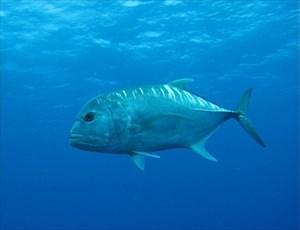 Fishy!