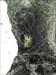 Um pinheiro log image
