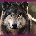 Rockhound24