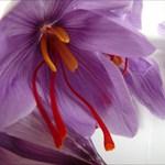 saffron lady