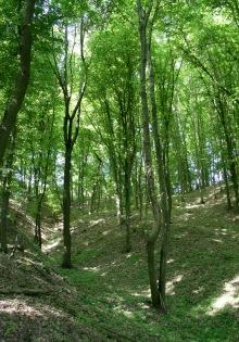 Les blízko vyhlídky