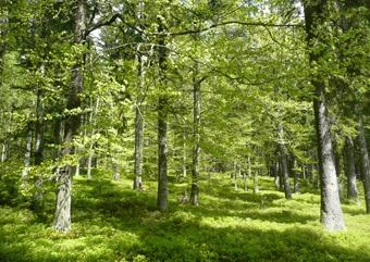 Smíšený les na jižním svahu