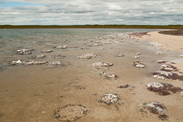 Lake Thetis - stromatolites