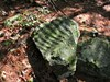 ripple rock log image