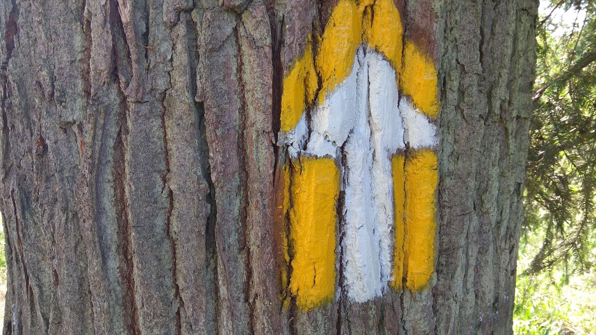 lesní okruh