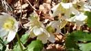 ....ein Blumengruß von J uli us......