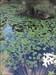 Camuflagem log image