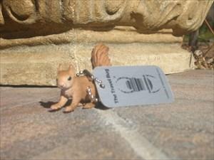 Little Squirrel in Nov 2010