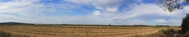 A rota do arroz #4 - Oryza rufipogon (3)