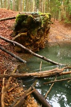 Stromy spadlé do jezírka a skalní výchoz