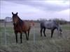 Friendly horses near BCP129
